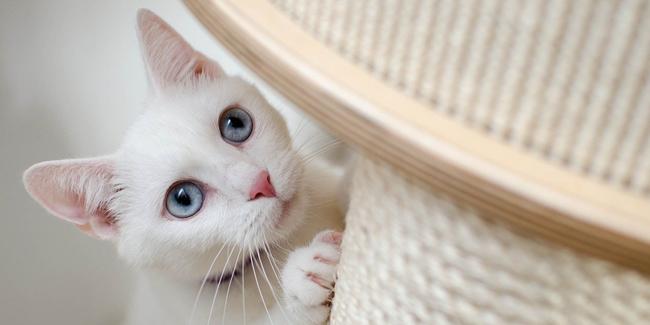 Comment changer de formule d'assurance chien/chat ?