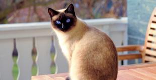 Jusqu'à quel âge mon animal est-il couvert par l'assurance chien/chat ?