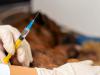 Les vaccins sont-ils remboursés par l'assurance chien/chat ?
